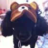 หมวกน้องหมาแฟนซี รัลัคคุมะ พร้อมส่ง