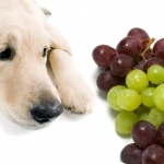 8 ผักและผลไม้อันตรายต่อสุนัข ที่ผู้เลี้ยงต้องรู้!!!