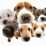 10 เรื่องแปลกของน้องหมา