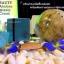Abalone Beauty Cream ครีมนางฟ้า ครีม บำรุงผิวหน้า ใส เด้ง ชุ่มชื่น ยกกระชับในกระปุกเดียว thumbnail 3