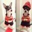 ชุดน้องหมาแฟนซีตรุษจีน สีแดง พร้อมส่ง thumbnail 1