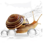 Snail Secretion Extract