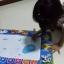 กระดานน้ำ 2 in 1 ขนาด ก 73x ย 49 cm พัฒนาการเรียนรู้ด้วยศิลปะ รุ่นนี้ไม่มีสีนะคะ thumbnail 3